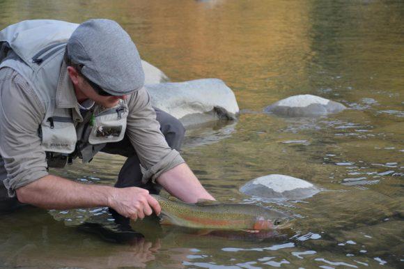 Releasing Ruakituri trout